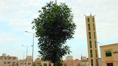 Photo of المساجد الصديقة للبيئة توفير للطاقة وإسهام في أنسنة المدن